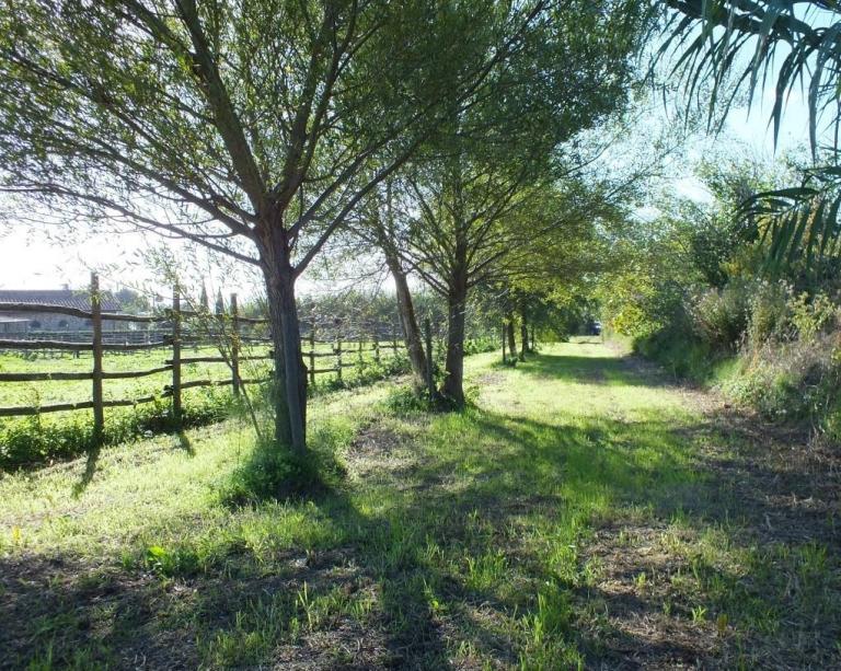 VENDESI 10.000 mq di parco con olivi e piante da frutto CON POSSIBILTA' DI COSTRUIRE VILLA DI CAMPAGNA