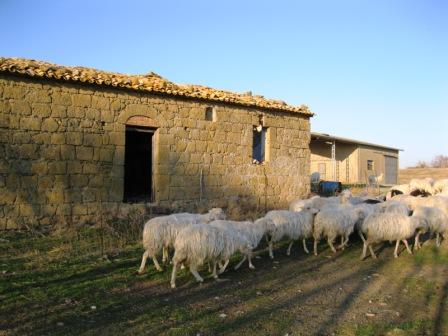 VENDESI Casale - Pitigliano GR - Azienda agricola