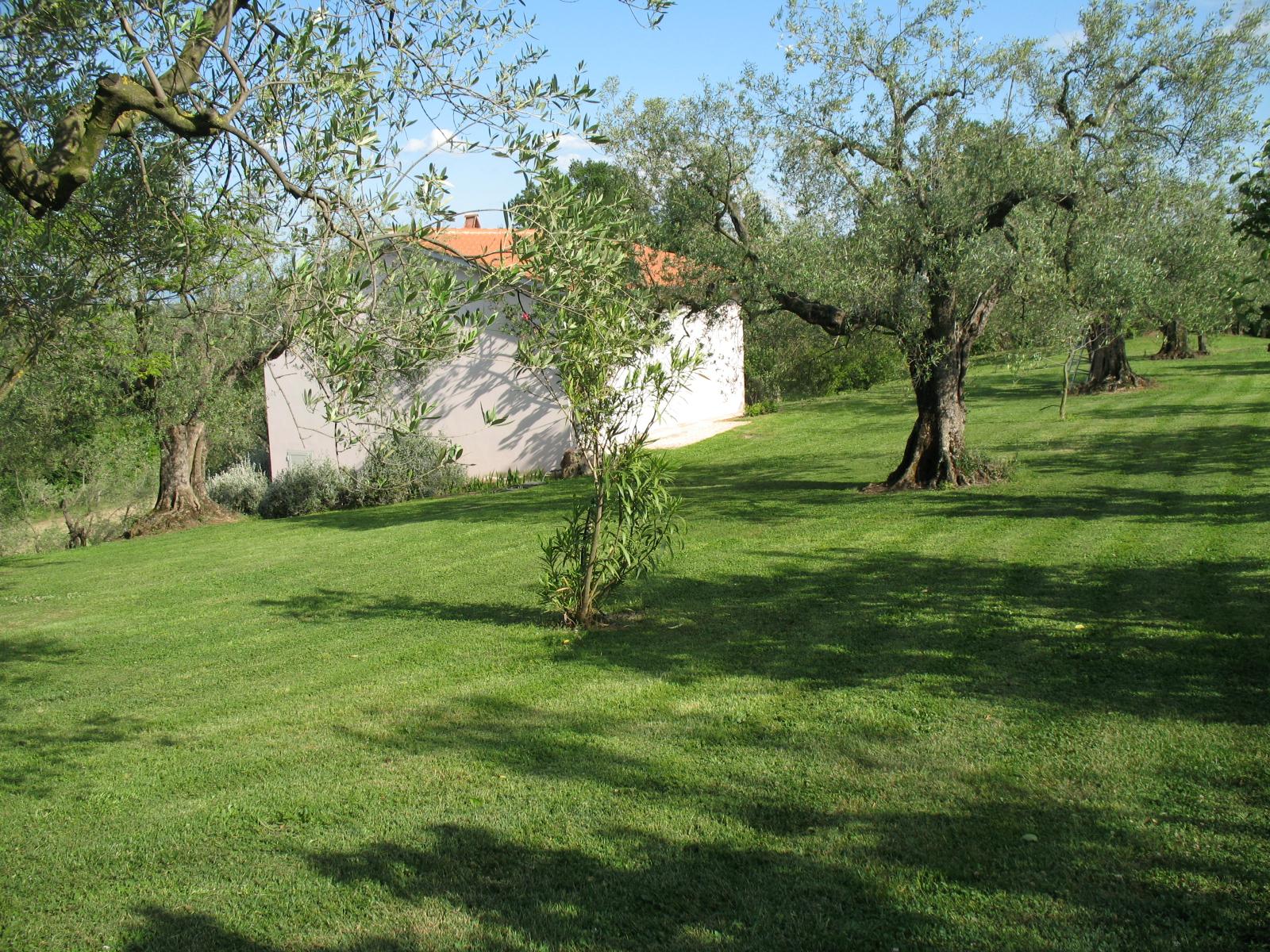 VENDESI Villa - canino VT - Campagna